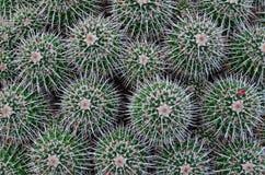 Modello del cactus del fondo Fotografia Stock Libera da Diritti