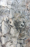 Modello del cemento del fondo Immagini Stock