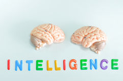 Modello del cervello umano immagini stock libere da diritti