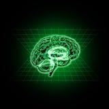 Modello del cervello umano illustrazione di stock