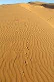 Modello del deserto della sabbia con le tracce di volpe Immagini Stock