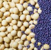 Modello del fagiolo della soia come fondo Fotografia Stock