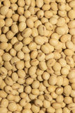 Modello del fagiolo della soia come fondo Immagine Stock