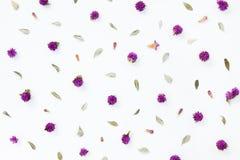 Modello del fiore e delle foglie porpora Fotografia Stock