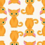 Modello del gattino Fotografia Stock