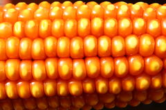 Modello del nocciolo di mais sulla spiga di frumento asciutta Immagini Stock
