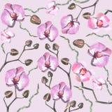 Modello del orhid dell'acquerello Immagini Stock Libere da Diritti