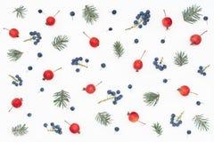 Modello del ` s del nuovo anno delle bacche, delle mele di paradiso e di attillato Immagine Stock Libera da Diritti