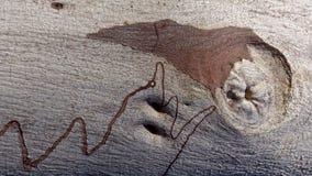 Modello del verme della gomma di Scribbly Immagine Stock Libera da Diritti