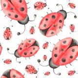 Modello dell'acquerello degli insetti, coccinelle, cimici, scarabei con le foglie su un fondo bianco illustrazione di stock