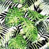 Modello dell'acquerello delle piante tropicali, silho in bianco e nero delle foglie Fotografia Stock