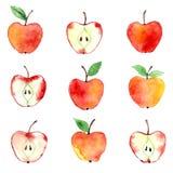 Modello dell'acquerello di Apple Immagini Stock Libere da Diritti