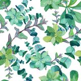 Modello dell'acquerello dell'eucalyptus, ortica, menta, succulenti illustrazione vettoriale