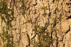 Modello dell'albero Immagini Stock