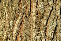 Modello dell'albero Fotografia Stock
