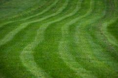 Modello dell'erba Immagine Stock