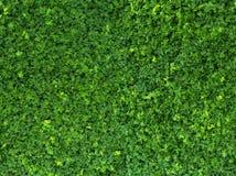 Modello dell'erba immagini stock