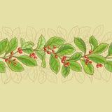 Modello dell'erba mate illustrazione vettoriale