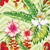 Modello dell'orchidea delle foglie di palma dell'ibisco Fotografia Stock Libera da Diritti