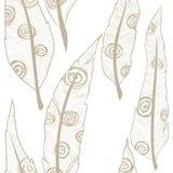 Modello dell'ornamento delle piume Fotografie Stock