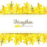 Modello della carta di suspensa di forsythia con lo spazio della copia sulla banda, albero giallo sbocciante lanuginoso della mol royalty illustrazione gratis