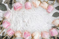 Modello della corona della pagina con le rose asciutte, i germogli di fiore rosa, i rami e le foglie isolati su fondo lanuginoso  immagine stock libera da diritti