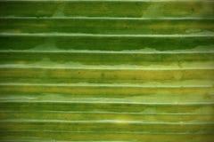 Modello della foglia della banana per i precedenti Fotografia Stock Libera da Diritti