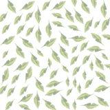 Modello della molla a lamelle di foglie verdi Fotografie Stock