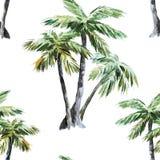 Modello della palma