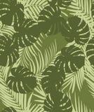 Modello della palma Fotografia Stock