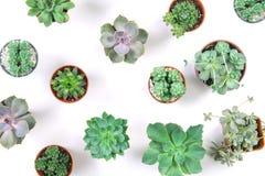 Modello della pianta mista dei succulenti in vaso su fondo bianco, o Fotografie Stock Libere da Diritti