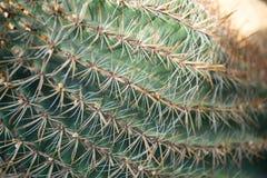 Modello della punta sul cactus Fotografia Stock