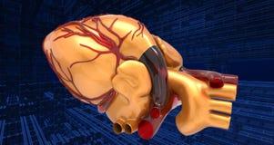 Modello della rappresentazione umana artificiale del cuore 3d Fotografie Stock