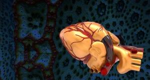 Modello della rappresentazione umana artificiale del cuore 3d Immagini Stock