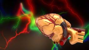 Modello della rappresentazione umana artificiale del cuore 3d Immagini Stock Libere da Diritti