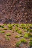 Modello della roccia e dell'erba Immagini Stock