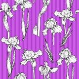 Modello della viola dell'iride Immagini Stock Libere da Diritti