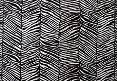 Modello della zebra Immagine Stock