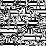 Modello della zebra barrato Fotografie Stock Libere da Diritti