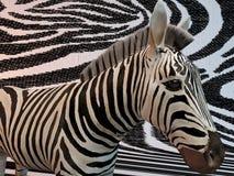 modello della zebra 3d Immagini Stock