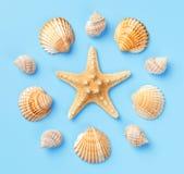 Modello delle conchiglie e delle stelle marine su un fondo blu-chiaro Florida Fotografia Stock Libera da Diritti