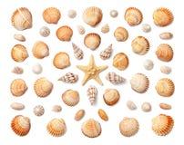 Modello delle conchiglie esotiche e delle stelle marine isolate sulla parte posteriore di bianco Immagini Stock Libere da Diritti