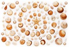 Modello delle coperture e delle stelle marine in una forma a spirale su fondo bianco Immagini Stock