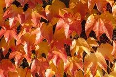 Modello 4 delle foglie Fotografie Stock Libere da Diritti