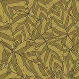 Modello delle foglie Fotografia Stock Libera da Diritti