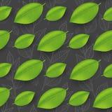 Modello delle foglie Immagini Stock