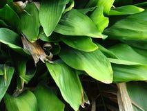 Modello delle foglie Fotografie Stock