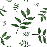 Modello delle foglie Fotografia Stock