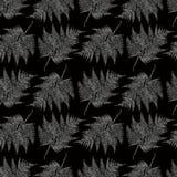 Modello delle foglie della felce Immagini Stock