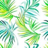 Modello delle foglie di palma Reticolo tropicale senza giunte Fotografia Stock Libera da Diritti